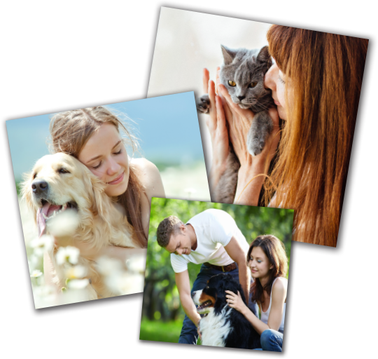 Grieving pet loss is important for restoring joy and moving forward - we can help at Heavenly Paws of Texas
